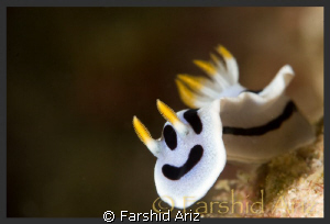 A new look at Nudibranch  (Smiling Face) by Farshid Ariz
